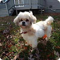 Adopt A Pet :: Kate - West Deptford, NJ