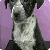 Adopt A Pet :: Wayne - Fort Collins, CO