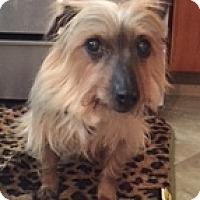 Adopt A Pet :: Jakki - N. Babylon, NY