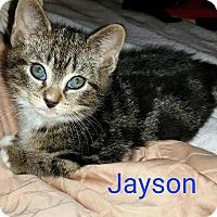Adopt A Pet :: Jayson - Island Park, NY