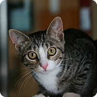 Adopt A Pet :: Skyler - Toms River, NJ