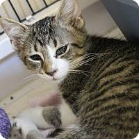 Adopt A Pet :: Drake - Medina, OH