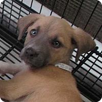 Adopt A Pet :: Daphne - Clear Lake, IA