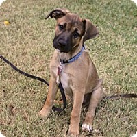 Adopt A Pet :: Lexi - Winters, CA