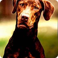 Adopt A Pet :: Hogan - Denver, CO