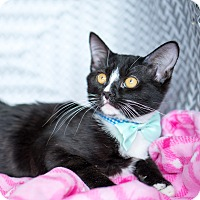 Adopt A Pet :: Joshua - Montclair, CA