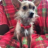 Adopt A Pet :: Kaydee - Buffalo, NY