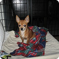 Adopt A Pet :: MR BROWN - Port Clinton, OH