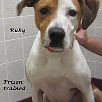 Adopt A Pet :: Ruby - Bartonsville, PA