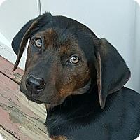 Adopt A Pet :: Macadamia - Duluth, GA