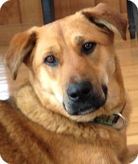 Kansas   Adopted Dog  ...