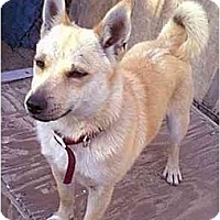 Adopt A Pet :: Jiminy Cricket - dewey, AZ