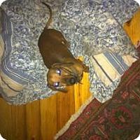Adopt A Pet :: Bo Bo - Marlton, NJ