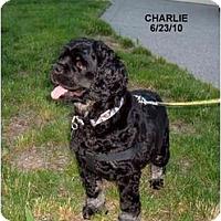 Adopt A Pet :: Charlie - Tacoma, WA