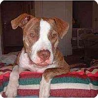Adopt A Pet :: RD - Lodi, CA