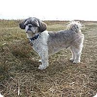 Adopt A Pet :: Jake - Saskatoon, SK