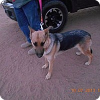 Adopt A Pet :: Annie - Victorville, CA