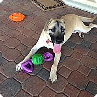 Adopt A Pet :: Scooby - West Palm Beach, FL