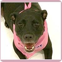 Adopt A Pet :: Sheila - Miami, FL