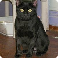 Adopt A Pet :: Samatha - Dover, OH