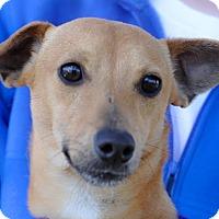 Adopt A Pet :: Parker - Gainesville, FL