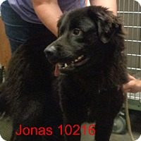 Adopt A Pet :: Jonas - baltimore, MD