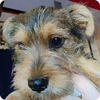 Adopt A Pet :: McKinley - Henderson, NV
