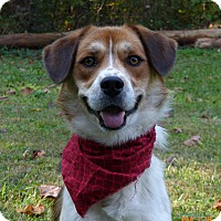 Adopt A Pet :: Caesar - Mocksville, NC