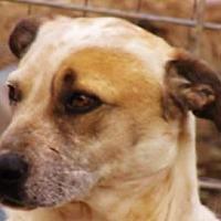 Adopt A Pet :: Duncan - Oakland, AR