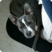 Adopt A Pet :: Angus **Courtesy Cupid** - West Allis, WI