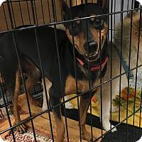Adopt A Pet :: Troy - Tucson, AZ