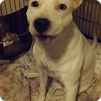 Terrier (Unknown Type, Medium) Mix Dog for adoption in Tampa, Florida - BLANCIA (JW-CP)