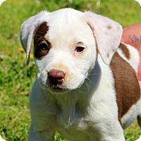 Adopt A Pet :: Anna~adopted! - Glastonbury, CT