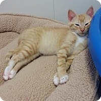 Adopt A Pet :: Lorenzo - Chippewa Falls, WI