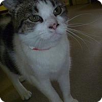 Adopt A Pet :: Amarisa - Hamburg, NY
