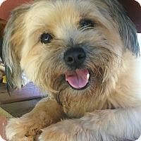 Adopt A Pet :: Geoffrey - Atlanta, GA