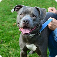 Adopt A Pet :: Boomer - Gardnerville, NV