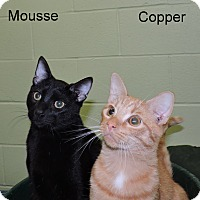 Adopt A Pet :: Mousse - Slidell, LA