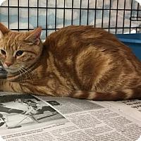 Adopt A Pet :: George 5 - Pendleton, NY