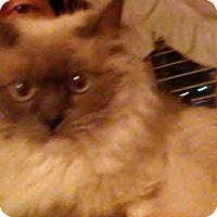 Adopt A Pet :: Sassy - On home Trial! - Greensboro, NC