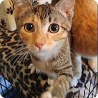 Adopt A Pet :: Reeses - Waco, TX