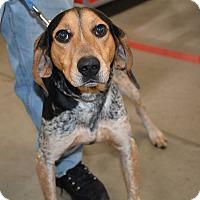 Adopt A Pet :: Gunner - Hopkinsville, KY