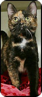 Domestic Shorthair Cat for adoption in Shippenville, Pennsylvania - Stella