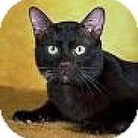 Adopt A Pet :: Tina - Kalispell, MT