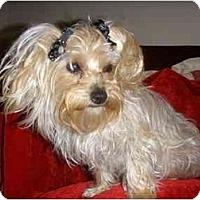Adopt A Pet :: Ella - Mooy, AL
