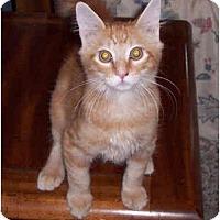 Adopt A Pet :: Squeeker - Summerville, SC
