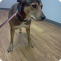 Adopt A Pet :: Sasha - Murfreesboro, TN
