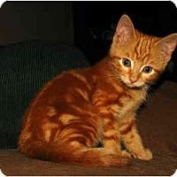Adopt A Pet :: Max - Oxford, NY