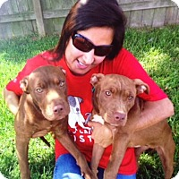 Adopt A Pet :: Jemma - Houston, TX