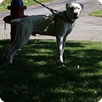 Adopt A Pet :: Theo - Baden, PA